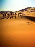 Vestsahara? Udgives der overhovedet litteratur fra Vestsahara?